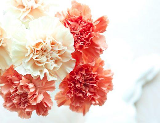Osterhase DIY Flowergirls Nelken